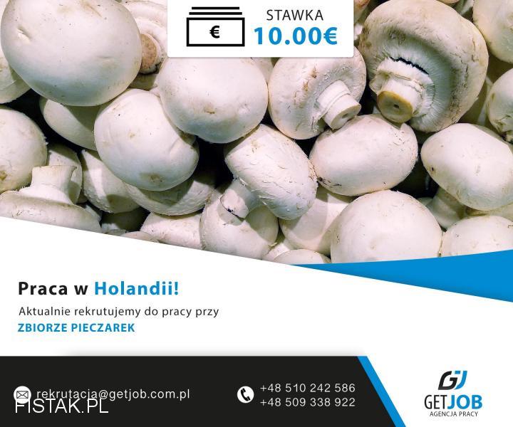 Zbiór pieczarek, bez doświadczenia - praca w Holandii - 10 euro