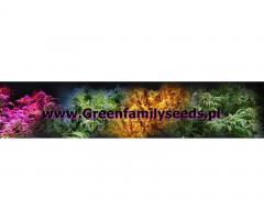 nasiona konopi i tytoniu